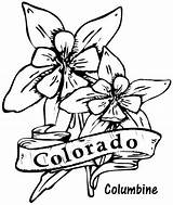 Coloring Columbine Flower Colorado Flowers State Drawing Drawings Clipart Printable Hibiscus Sheets Template Central Sketch Arizona Cactus Library Cliparts sketch template
