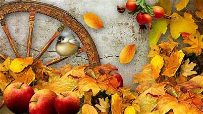 Harvest Fall Wallpapers Natures
