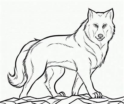 Wolf Template Coloring Printable Templates Animal