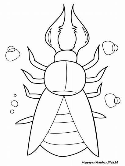Coloring Gambar Serangga Mewarnai Insects Insect Printable