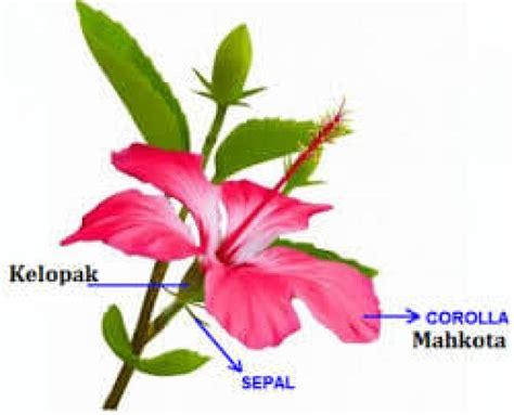 bagian bagian bunga beserta fungsinya gambar