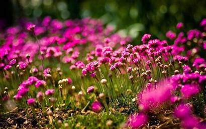 Flowers Nature Field Sunny Wallpapers Google Storm