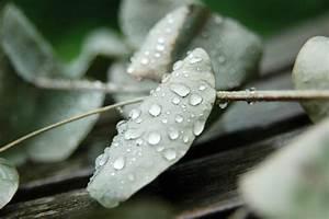 Was Vertreibt Mücken : eukalyptus in der natur und heilkunde ~ Whattoseeinmadrid.com Haus und Dekorationen