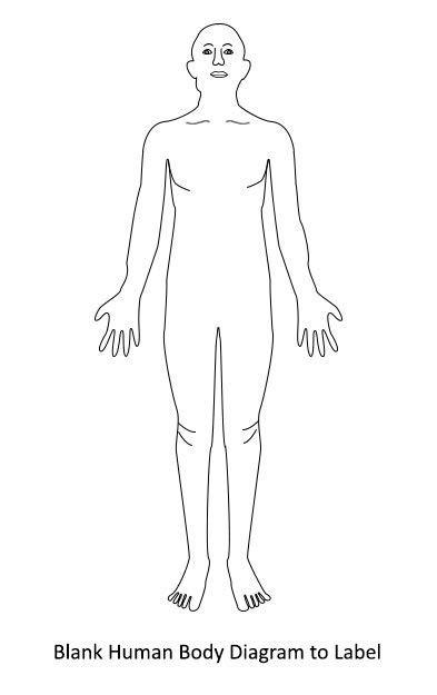 blank human body diagram human body diagram body