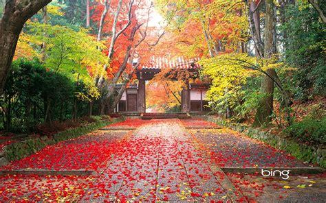 Desktop Wallpaper Fall Laptop Backgrounds by Wallpaper Proslut High Resolution Beautiful Nature Jungle