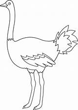Ostrich Coloring Clip Template Emu Outline Colorable Bird Line Sketch Egg Sweetclipart Templates Parrot sketch template