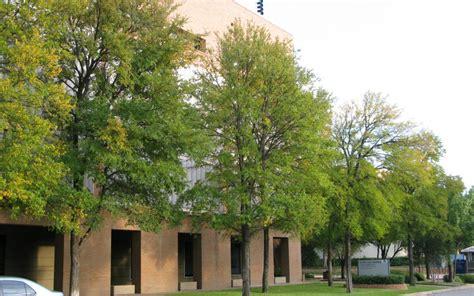 home design dallas cedar elm david rolston landscape architects