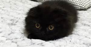 Wie Sieht Ein Hummelnest Aus : kleiner kater sieht aus wie ein mini monster ~ Yasmunasinghe.com Haus und Dekorationen