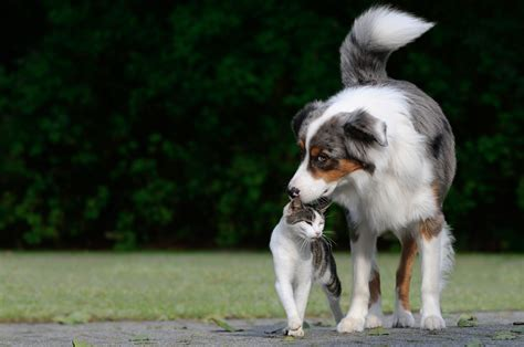 Cat And Dog Cats And Dogs Sworn Enemies Or Potential Besties