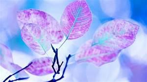 Pflanze Lila Blätter : hintergrundbilder sonnenlicht bl tter fotografie lila ast blau pollen bl hen rosa ~ Eleganceandgraceweddings.com Haus und Dekorationen