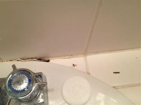 flying ants in bathroom uk 301 moved permanently