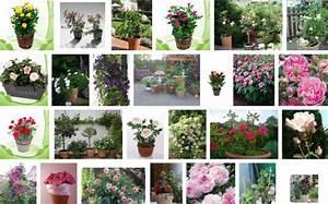 Rosen Im Topf Pflege : pflege von rosen im topf bzw im k bel ~ Lizthompson.info Haus und Dekorationen