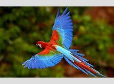 Ara Papagei unikale Fotografien der bunten Vögel