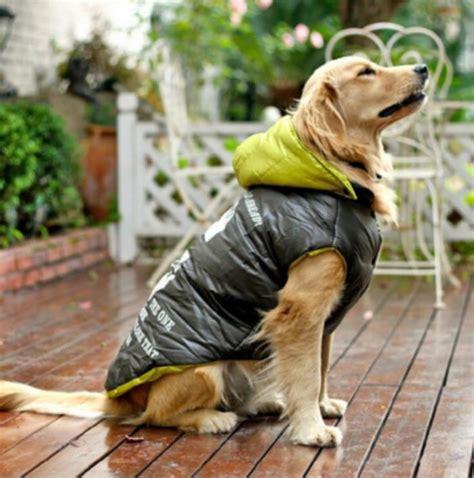 canapé pour grand chien habillez votre ami avec une doudoune pour chien