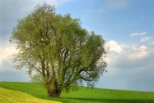 Feuchtes Holz Erkennen : kaminholz erle iwood wir liefern die w rme der natur direkt zu ihnen ~ Whattoseeinmadrid.com Haus und Dekorationen