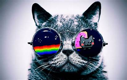 Cat Cool Backgrounds Cats Awesome Glasses Nyan