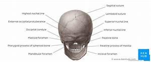 Skull  Anatomy  Structure  Bones  Quizzes