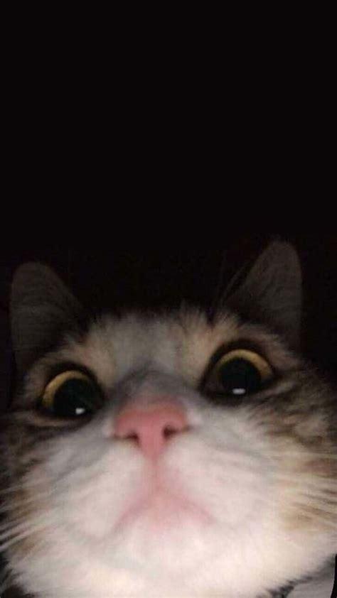 humor kucing lucu humor kucing humor humor kucing