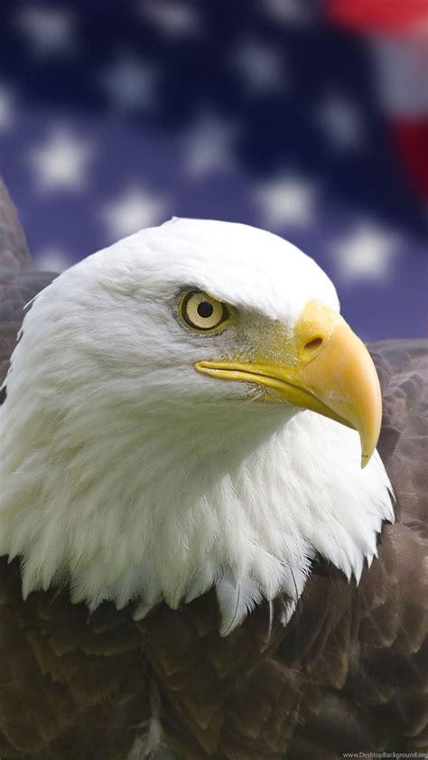 originalbald eagle usa iphone wallpapers backgrounds