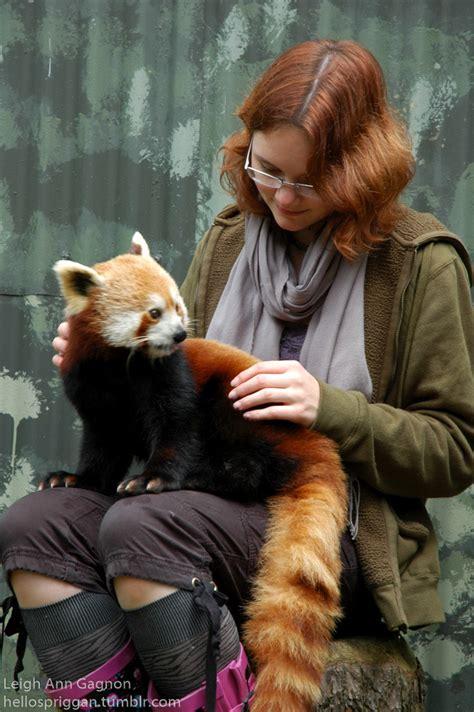feeding pandas
