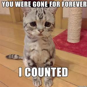 20 Cutest I Miss You Memes Of All Time | SayingImages.com