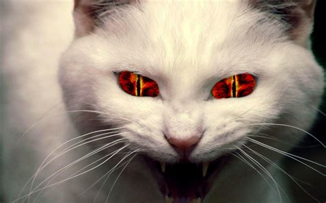 evil cat cats demon background funny hd kitty cute angry kitten fanpop attack inhuman why devil gato mundo re souls