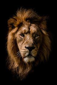 Wild Animal Portrait Photography