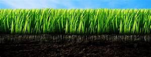 Traitement Mauvaise Herbe : traitement mauvais herbes les entreprises d gauthier ~ Melissatoandfro.com Idées de Décoration
