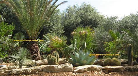 Bienfaits Du Cactus Dans Une Maison by Palmiers Prestige Vente De Palmiers Et Cocotiers D