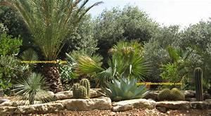Palmier De Jardin : palmiers prestige vente de palmiers et cocotiers d ~ Nature-et-papiers.com Idées de Décoration