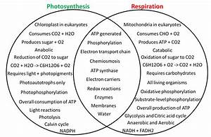 Wiring Diagram Database  Photosynthesis Vs Cellular