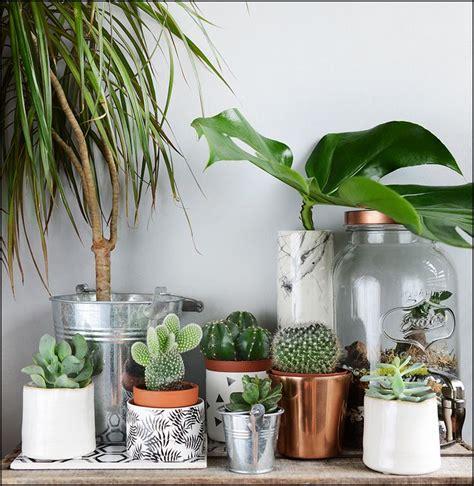 plante dans la chambre 1000 idées sur le thème terrarium pour plantes grasses sur