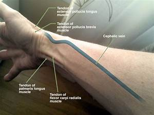 Diagram Of Veins In Wrist Babies