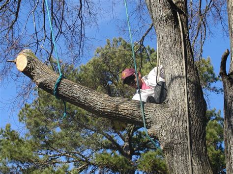 pruning trees pruning for healthy attractive productive plants east texas gardening