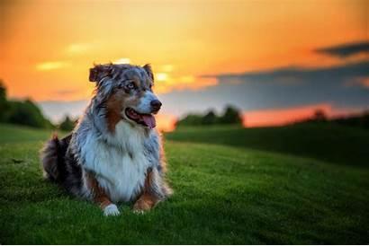 Dog Nature 4k Wallpapers Background Retriever