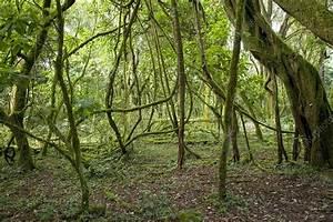 Rainforest Undergrowth - Stock Image C001  4125