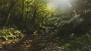 Landscape, Nature, Forest, River, Wallpapers, Hd, Desktop, And, Mobile, Backgrounds