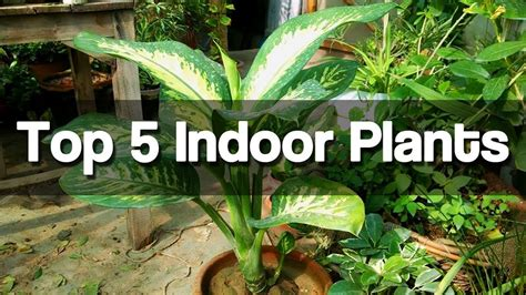 grow ls for indoor plants top 5 best indoor plants easy to grow indoor plants