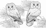 Owl Coloring Colouring Printable Sheets Difficult Adult Adults Flying Teenagers Forget Supplies Animal Don sketch template