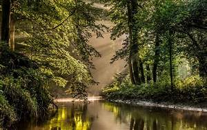Wallpaper, Sunlight, Trees, Landscape, Nature, Reflection, Morning, Mist, River, Sun, Rays