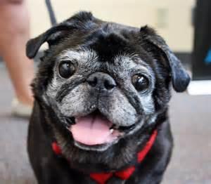 Petco Dog Adoption Events