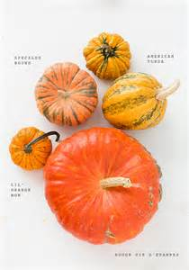 Types Of Pumpkins Australia by Heirloom Pumpkin Varieties For Fall Party Entertaining
