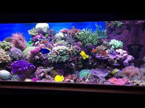 kit aquarium eau de mer complet aquarium eau de mer 1000 litres