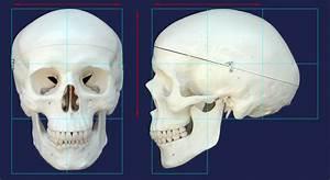 Shinyfirenight  Human Skull