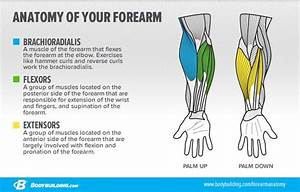 How To Get Bigger And Stronger Forearms