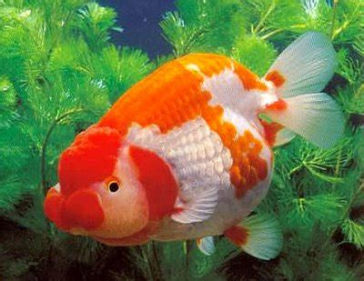 freshwater tropical fish species  animal life