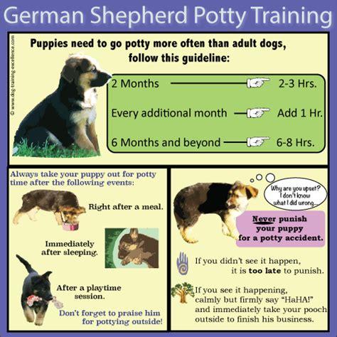 10 best german shepherd puppy tips