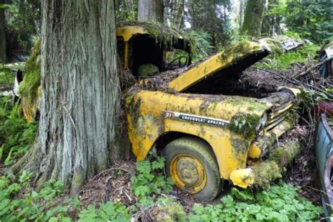forest burial place  abandoned cars  pics