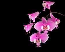 Orchids   AnimalCSI s ...
