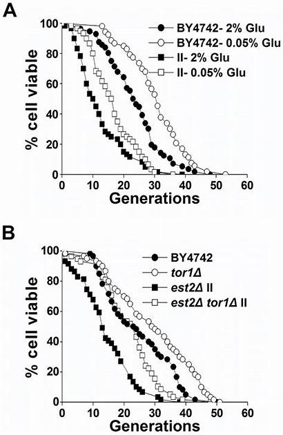 Tor Pathway Span Calorie Restriction Extends Inactivation